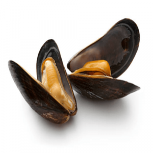 Mussel Frozen with Shell