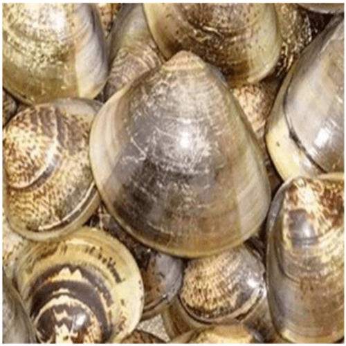 Clam Mussels